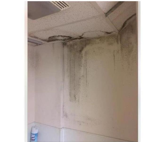 Mold Remediation 5 Ways To Reduce Mold Growth Inside Your Bathroom